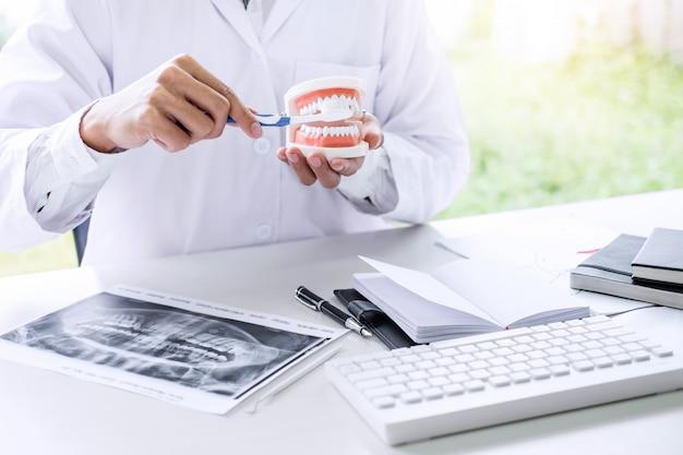 De handholding van de tandarts kaakmodel van tanden en het schoonmaken tand