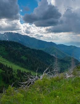 De hellingen van de bergketen in de zomer in de buurt van de stad almaty, kazachstan