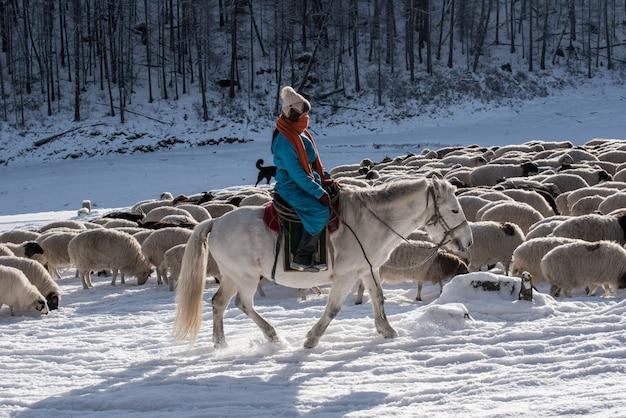De herderzitting van het meisje op paard en het herderskudde van schapen in prairie met snow-capped bergen op achtergrond