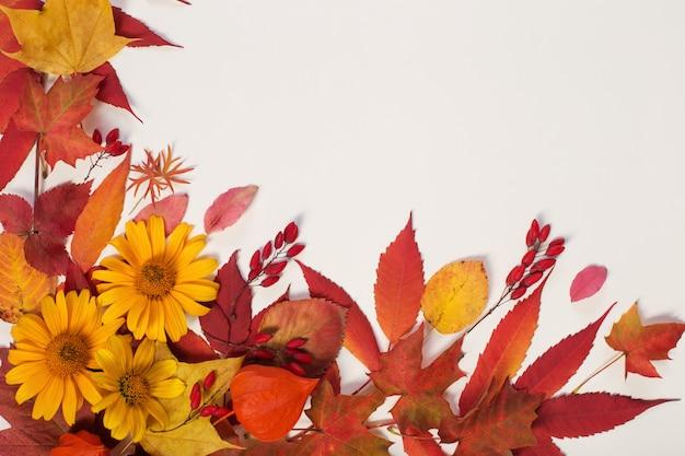 De herfst gaat weg en bloeit op wit