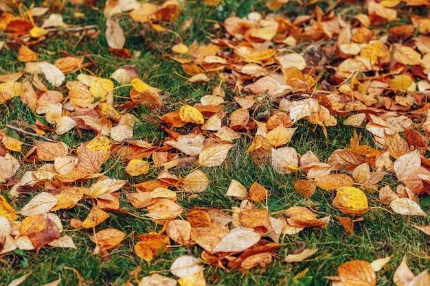 De herfst geel gebladerte op groen gras in herfstpark