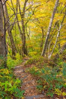 De herfst van karikomichi verlaat fukui-prefectuur japan