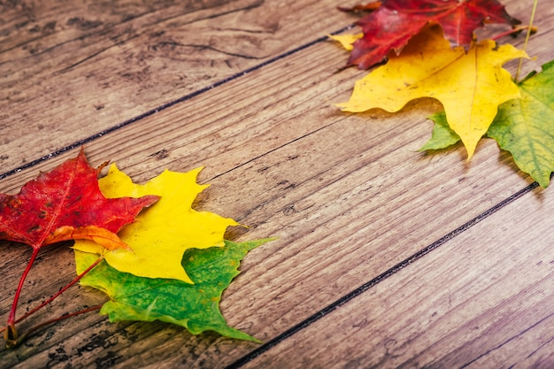 De herfstachtergrond met de kleurrijke bladeren van de dalingsesdoorn op rustieke houten lijst