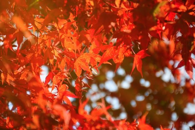 De herfstachtergrond met het warme licht van de de herfstzon.