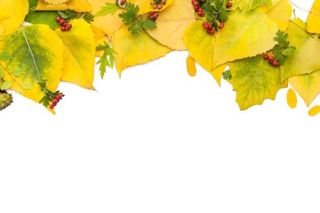 De herfstachtergrond van gele bladeren op wit
