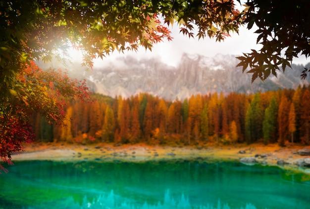 De herfstbladeren met onduidelijk beeldachtergrond in transsylvanië