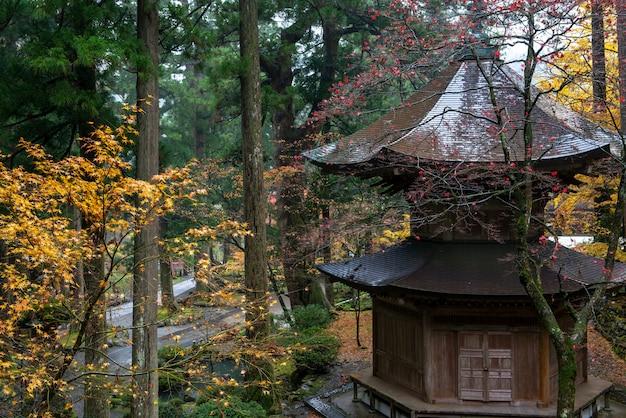 De herfstbladeren van japanse esdoorn (momiji) bij tempelachtergrond