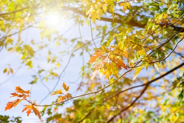 De herfstbomen in een bos en een duidelijke blauwe hemel met zon