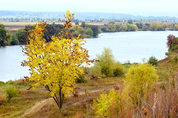 De herfstboom met gele bladeren door de rivier