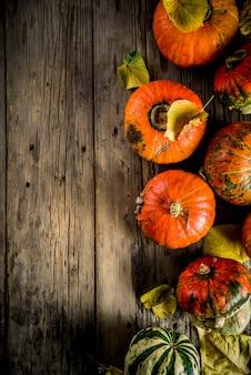 De herfstpompoenen in een lijst