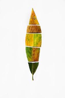 De herfstraadsel van bladeren van bomen van vele elementen, het concept van de seizoenverandering