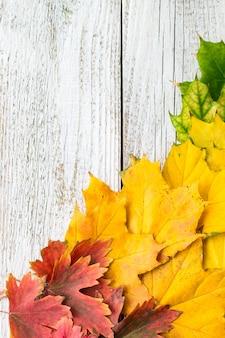 De herfstsamenstelling met kleurrijke bladeren van verschillende bomen in een hoek van het kader op een witte houten achtergrond