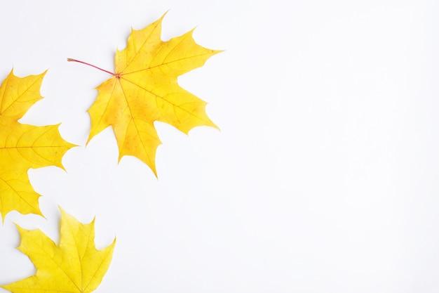 De herfstsamenstelling van bladeren op een witte achtergrond.