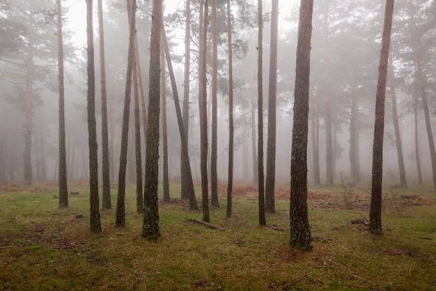 De herfstscène met mist in het nationale park sierra de guadarrama.