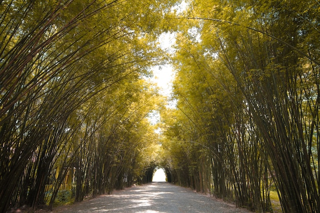 De herfsttoon bamboebos in thailand