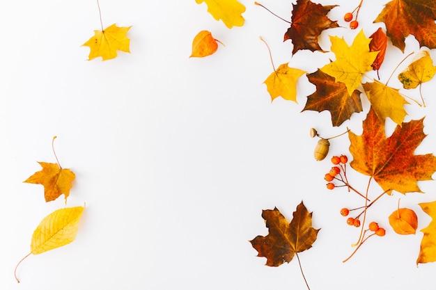 De herfstvlakte legt achtergrond op wit