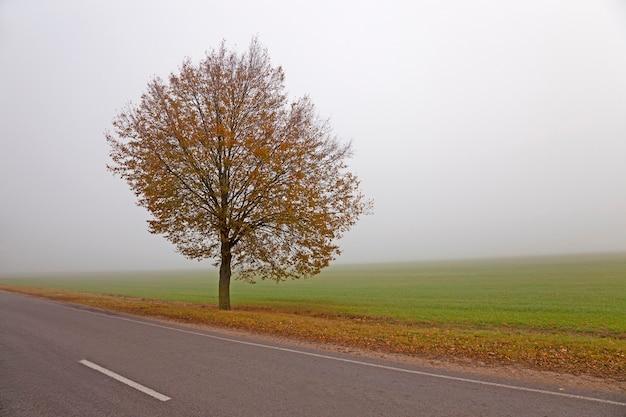 De herfstweg - de kleine weg naar een herfstseizoen