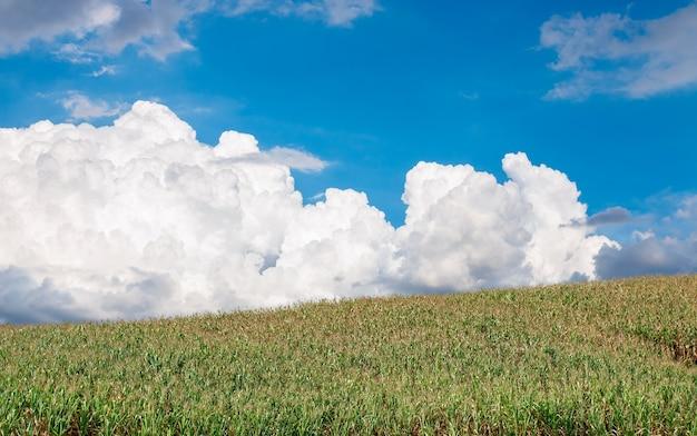 De heuvels hebben grote witte wolken en blauwe luchten, natuurlijk achtergrondconcept.