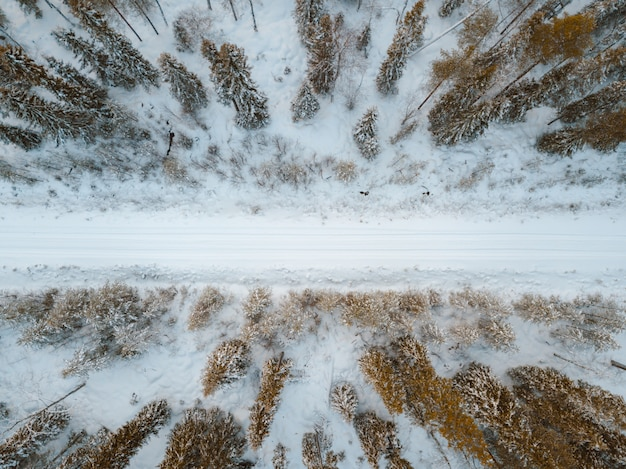 De hoge hoekmening van een sneeuw behandelde weg die door bomen wordt omringd die in finland worden gevangen