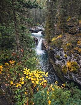 De hogere dalingen die van johnston canyon in diep bos bij nationaal park banff stromen