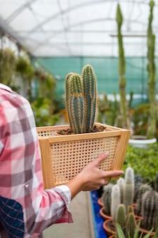De holdingsmand van de close-upvrouw met cactus in serre