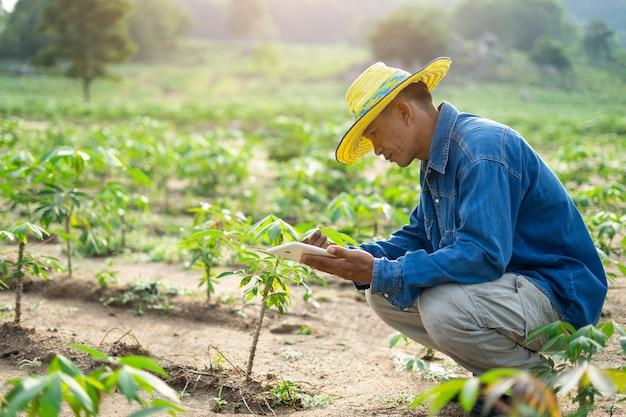 De holdingstablet die van de zakenmanlandbouwer zich op maniokgebied bevinden. slimmer boerenconcept.