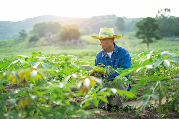 De holdingstablet die van de zakenmanlandbouwer zich op maniokgebied bevinden.