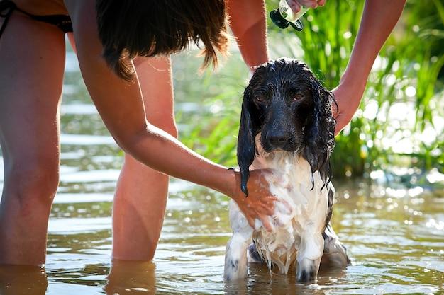 De hond baadt in de rivier