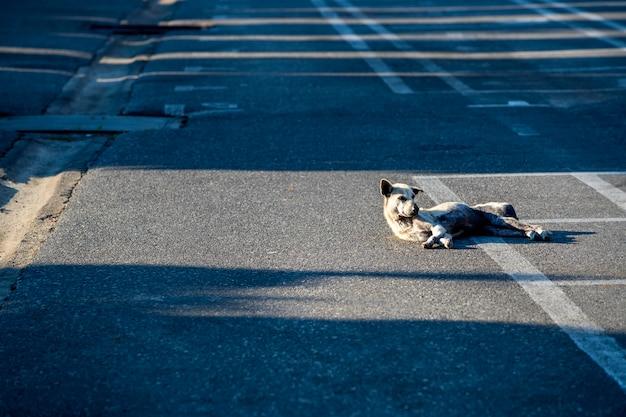 De hond die 's ochtends helder op de weg slaapt, negeert niets doet zich eenzaam