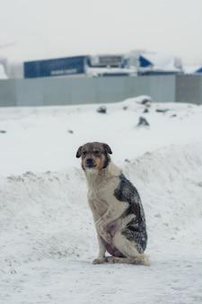 De hond duwt de poten van de kou