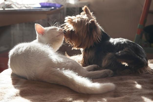 De hond en de kat liggen samen in huis en koesteren, genieten in het zonlicht