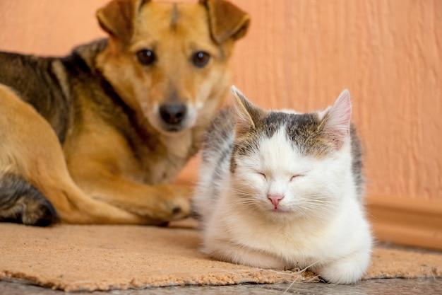 De hond en de kat liggen samen op het tapijt. hond en kat zijn vrienden