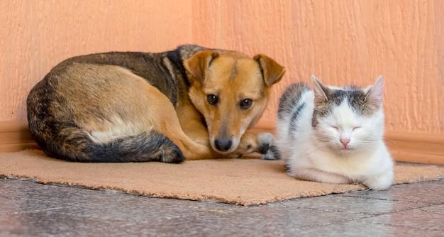 De hond en de kat liggen samen op het tapijt
