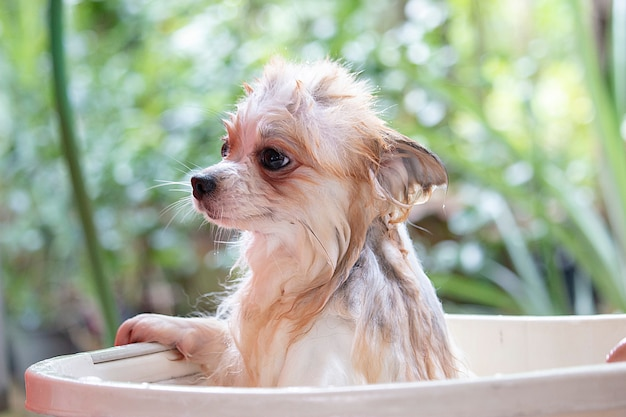 De hond heeft een douche.