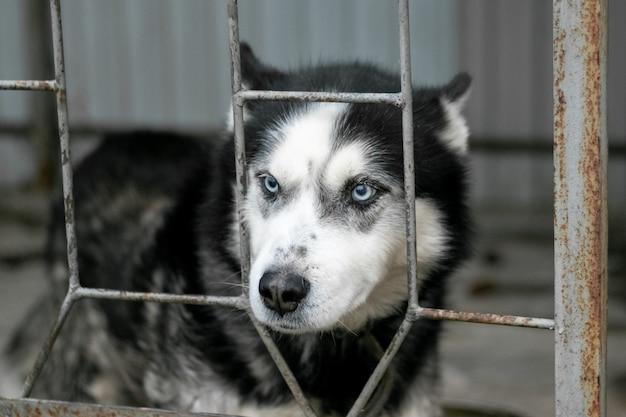 De hond in de volière kijkt van achter het hek
