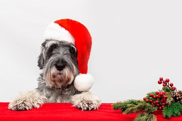 De hond in een kerstmuts van de kerstman