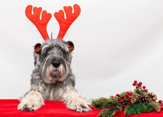 De hond in het kerstrendiergewei