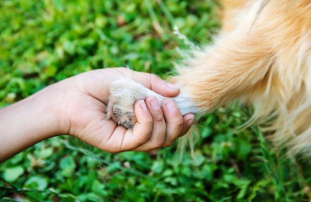 De hond is de vriend van de mens. geeft een poot aan het kind.