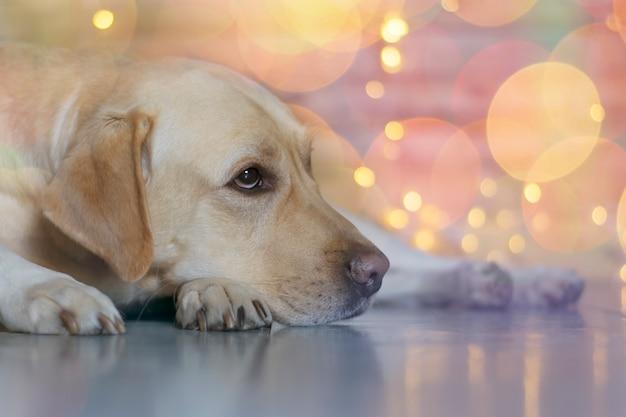 De hond is verdrietig op kerstnacht
