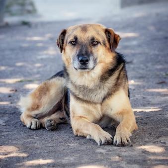 De hond ligt bij zonnig weer op het asfalt