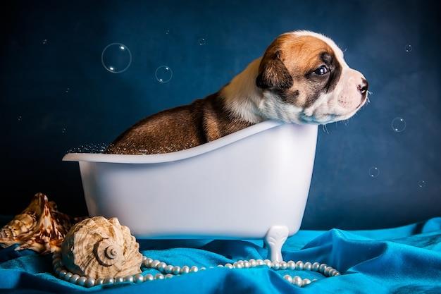 De hond ligt in de badkuip met bubbels. hoge kwaliteit foto