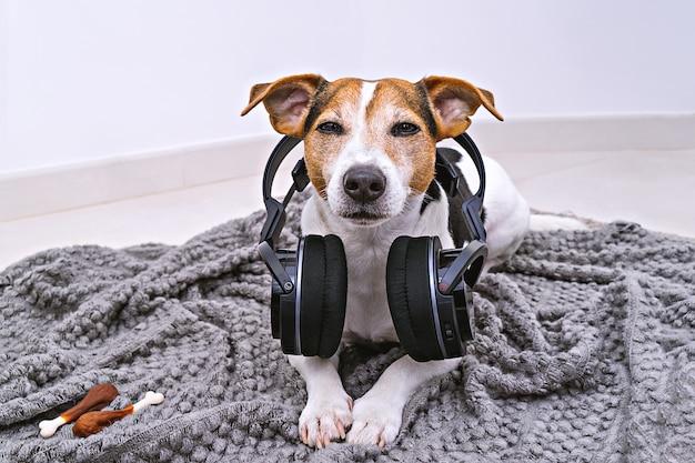 De hond ligt in draadloze hoofdtelefoons op deken