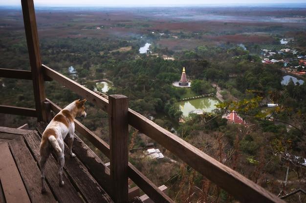 De hond op de top van de berg