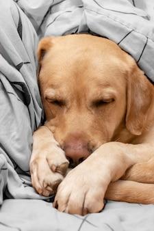 De hond slaapt comfortabel in het bed.