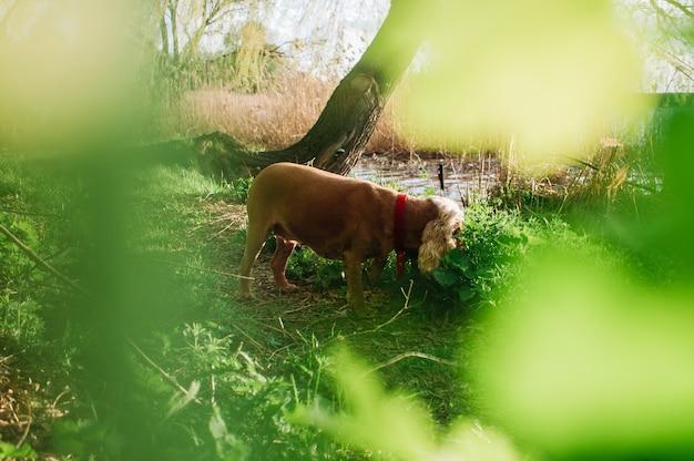 De hond vanuit de bosjes bekijken