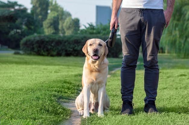 De hond voert het commando uit om naast hem te gaan zitten. hondentraining voor een wandeling.