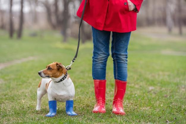 De hondzitting van jack russell naast een meisje in jeans en rode regenlaarzen in de lentepark.