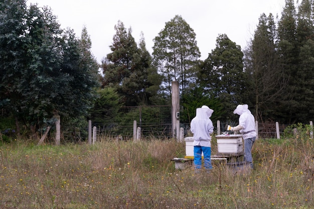De honingbijen controleren