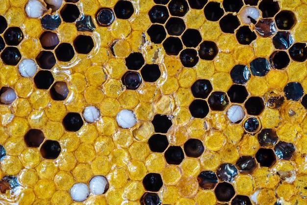 De honingraat van de close-upoppervlakte met honingbij geweven achtergrond