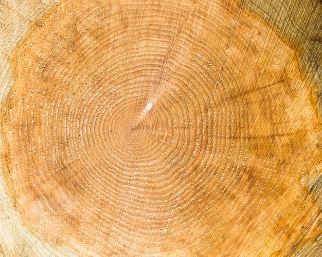 De houten textuur van cutted boomboomstam, close-up. Premium Foto